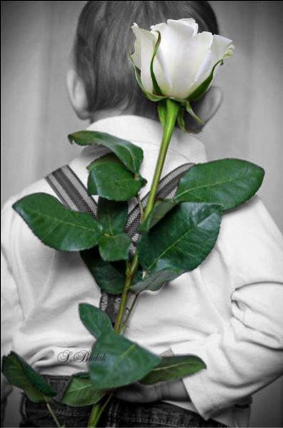 De quelle couleur est la célèbre rose Baccara ?