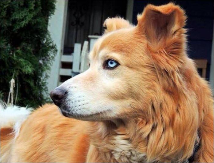 Deux races de chiens se sont croisées et ont engendré un chiot. De quelles races s'agit-il ?