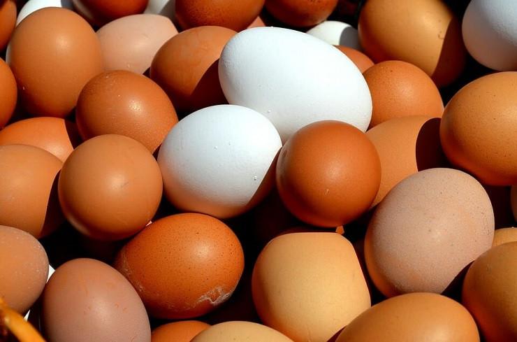 Culture générale autour de l'œuf !