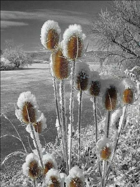 """Quel phénomène atmosphérique appelle-t-on """"jour blanc"""" en montagne ? (photo uniquement décorative)"""