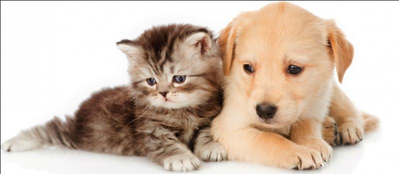 On peut donner du chocolat à notre chien ou à notre chat.