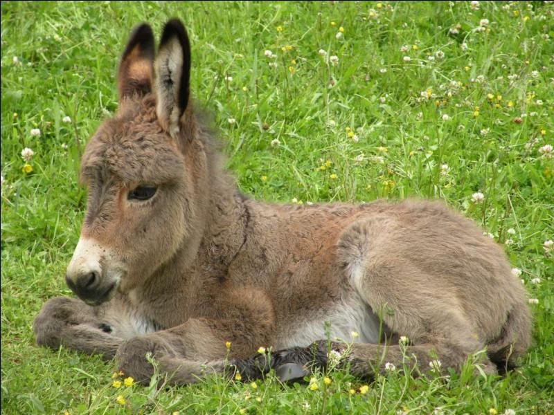 Comment dit-on ''âne'' en anglais ?