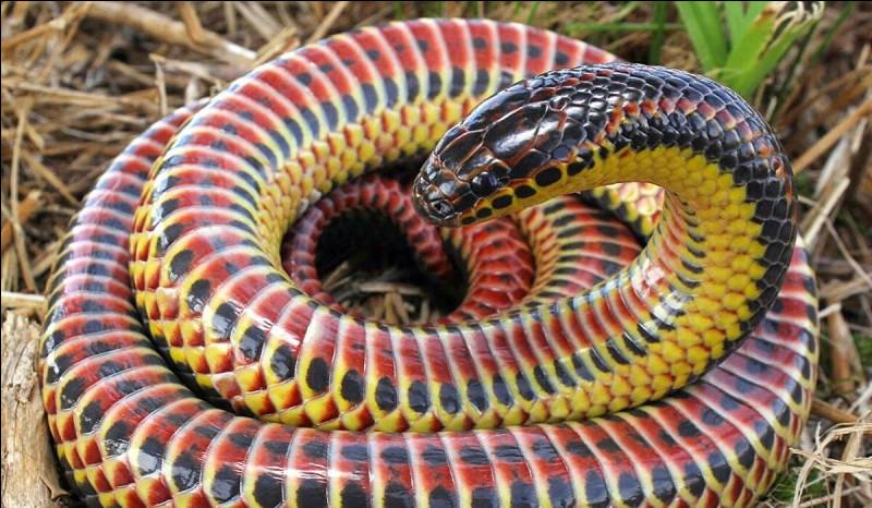 Comment dit-on ''serpent'' en anglais ?