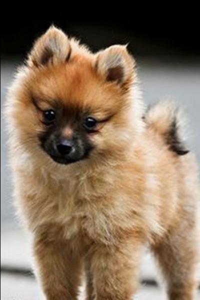 Comment dit-on ''chien'' en anglais ?
