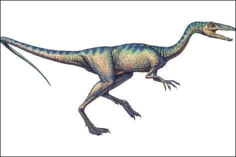 Compsognathus a été découvert...