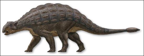 L'ankylosaure a été découvert...