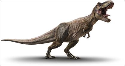 Le tyrannosaure a été découvert...