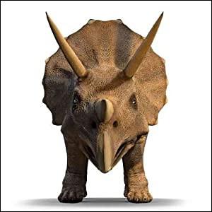 Le tricératops a été découvert...