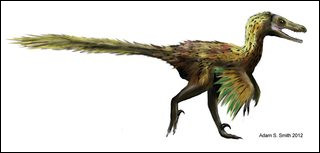 Le vélociraptor a été découvert...