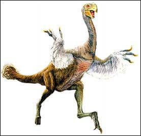 Le gigantoraptor a été découvert...