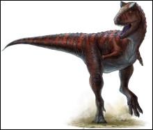Le carnotaurus a été découvert...