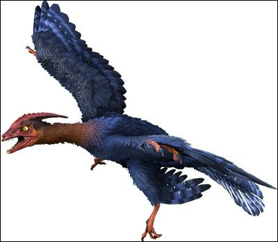 Le microraptor a été découvert...