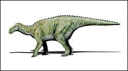 L'iguanodon a été découvert...