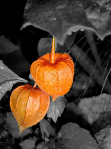 C'est en septembre/octobre que vous pourrez cueillir un magnifique bouquet de ces fleurs séchées. Quel nom ne portent-elles pas ?