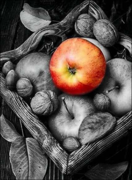 Et puis il est temps de cueillir les pommes ! Les Granny sont trop vertes, les Golden sont trop jaunes, les Gala sont trop rouges. Sur mes pommiers je trouve une variété aux couleurs variées, les miennes ont de beaux reflets rouges :