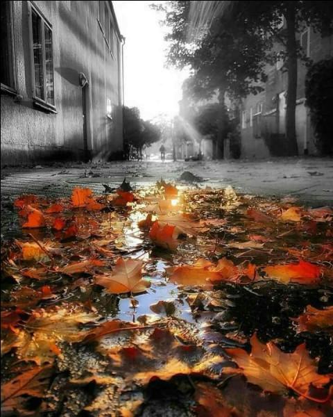 Septembre, octobre en culture générale