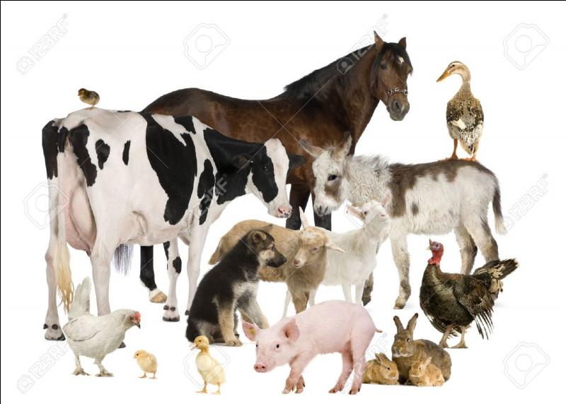 Quel est l'animal qui hennit ?