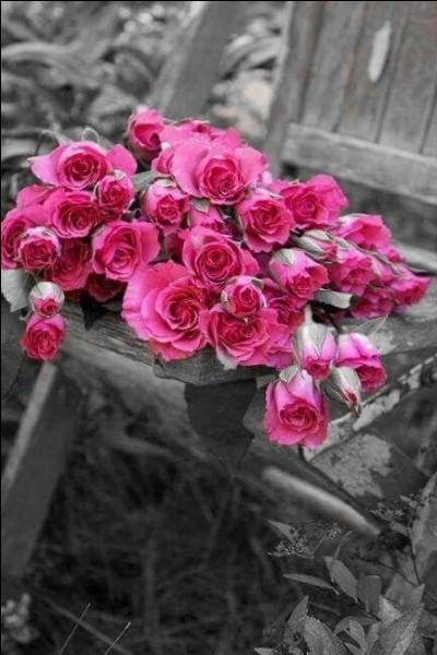 Enfin Sim n'aime pas ces fleurs ! (photo uniquement décorative)