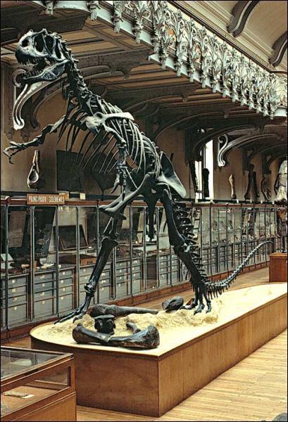 Dans quel musée parisien peut-on voir des squelettes d'animaux préhistoriques ?