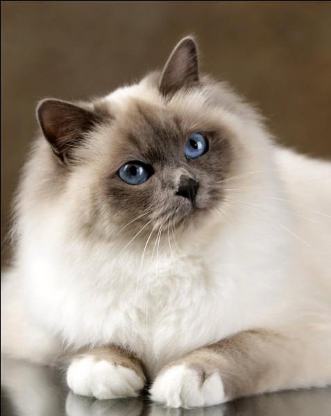 Dans quel pays le chat fut-il vénéré ?