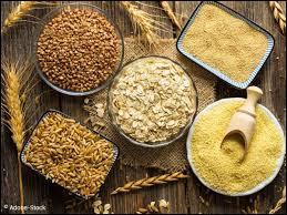 Nature - Quelle est la céréale la plus cultivée dans le monde ?