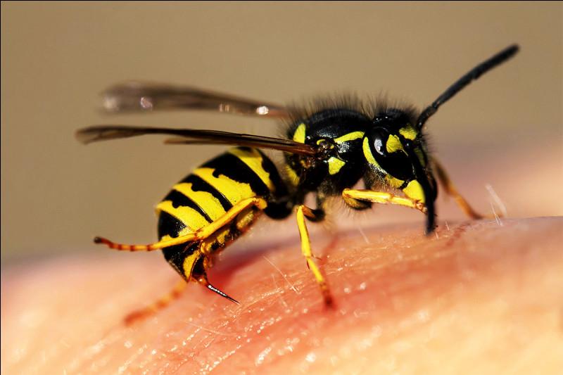As-tu déjà eu une piqûre d'abeille ou de guêpe ?