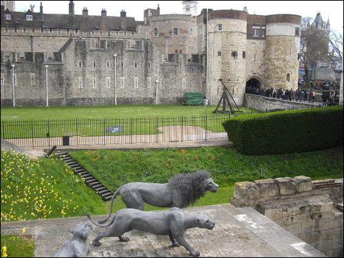 A l'époque de la Renaissance, il existait un moyen de visiter la Tour de Londres et sa ménagerie, sans payer l'entrée !