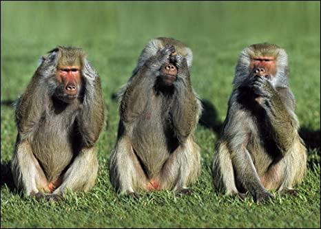 Qu'est-ce qui empêche les grands singes de parler ?