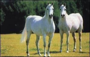 Pour avoir enlevé Ganymède, Zeus pour se faire pardonner offrit une paire de chevaux divins à son père. Qui est-il ?
