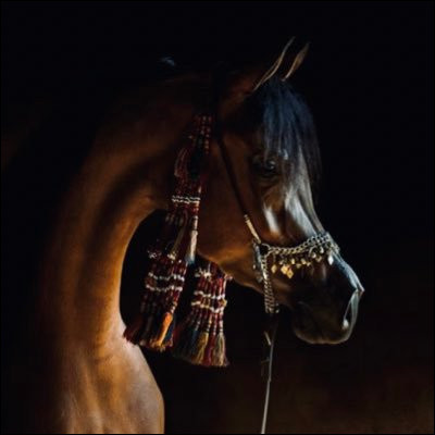 Qui est ce cheval permettant au prophète Mahomet de voyager de La Mecque à Jérusalem en une seule nuit ?