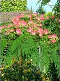 Quel est cet arbuste qui se plante de préférence en début d'automne dans les régions méridionales ?