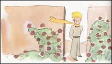 Pour le narrateur, pourquoi les roses ont-elles des épines ?