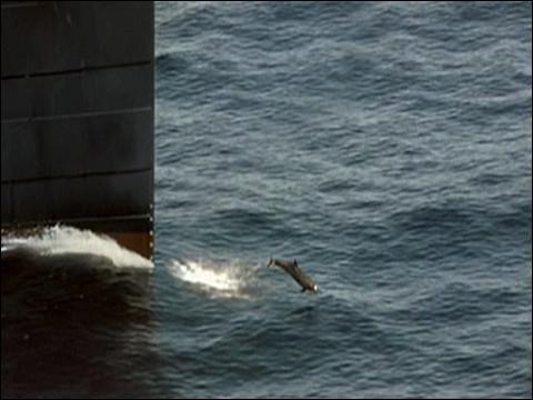 """""""Titanic"""" (fin) > Même dans l'eau, il s'en passe, des choses !"""