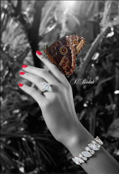 Quelle est la durée de vie d'un papillon, selon son espèce ?