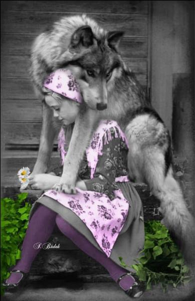 """Qui sont les ancêtres de la race de chien nommée """" chien-loup de Saarloos"""" ?"""
