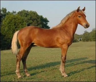 """Pour un cheval, que signifie le terme """"yearling"""" ?"""