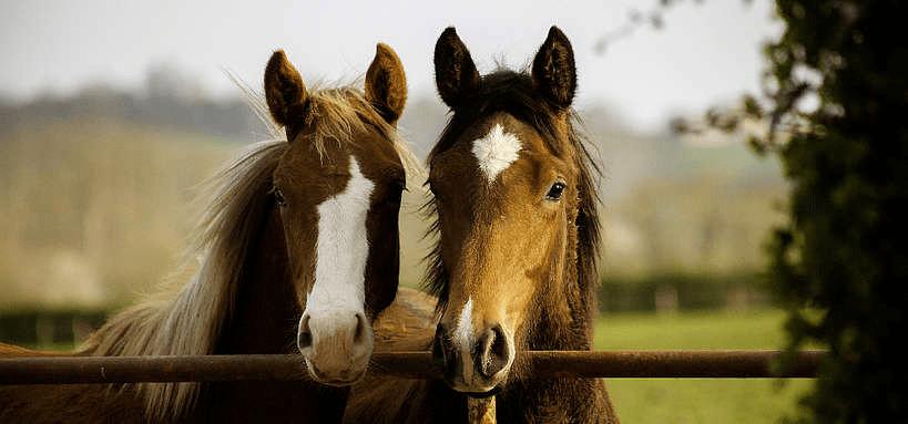 Les robes des chevaux