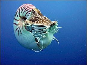 Quel est le nom de cet animal qui vit dans les mers depuis 400 millions d'années ?