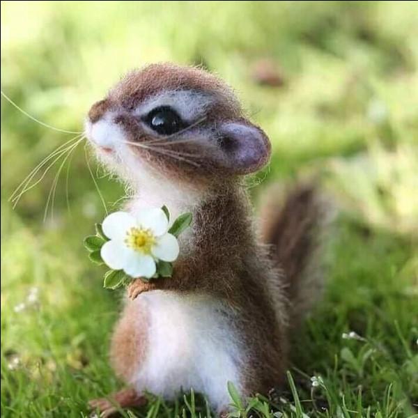 Quel animal trouves-tu le plus mignon ?
