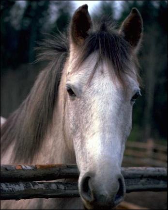 Combien d'allure un cheval a-t-il ?