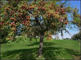 Comment s'appelle l'arbre où poussent les pommes ?