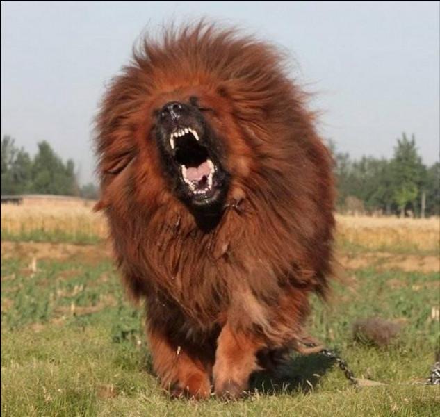 Cet animal est un babouin !