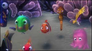 Combien de bandes blanches possède Nemo ?