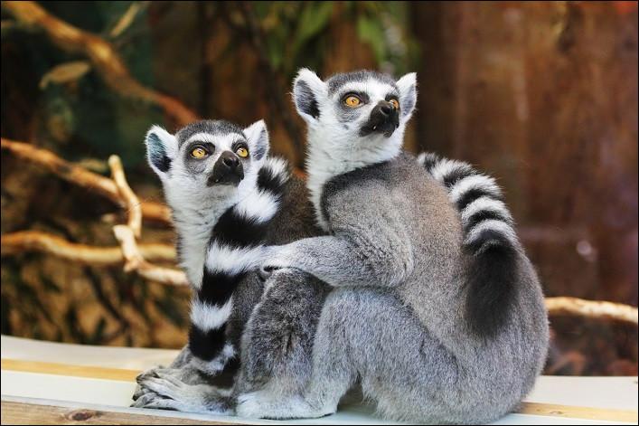Quels sont ces primates ?
