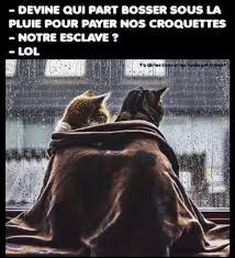 Les chats ont de la veine, l'obscurité ...