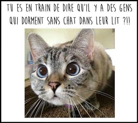 Si vous êtes digne de son affection, un chat deviendra votre ami, ...
