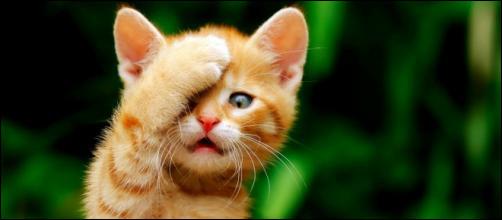 On ne choisit jamais un chat, ...