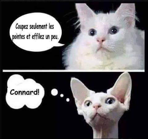 On ne possède pas un chat, ...