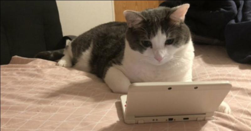J'aime dans le chat, cette indifférence avec laquelle il passe des salons ...