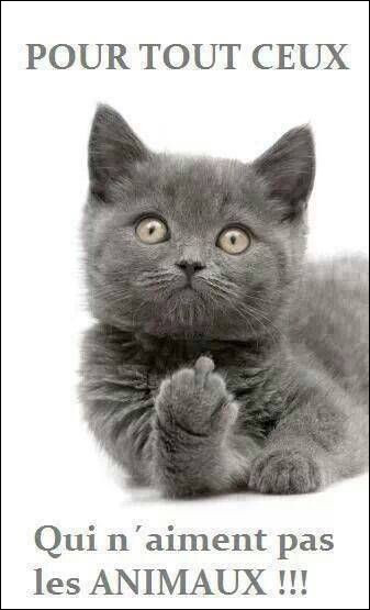 Il a dit : J'aime les chats car il n'existe pas de chat policier !